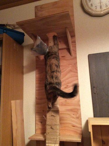 キャットタワーを登るサビ猫