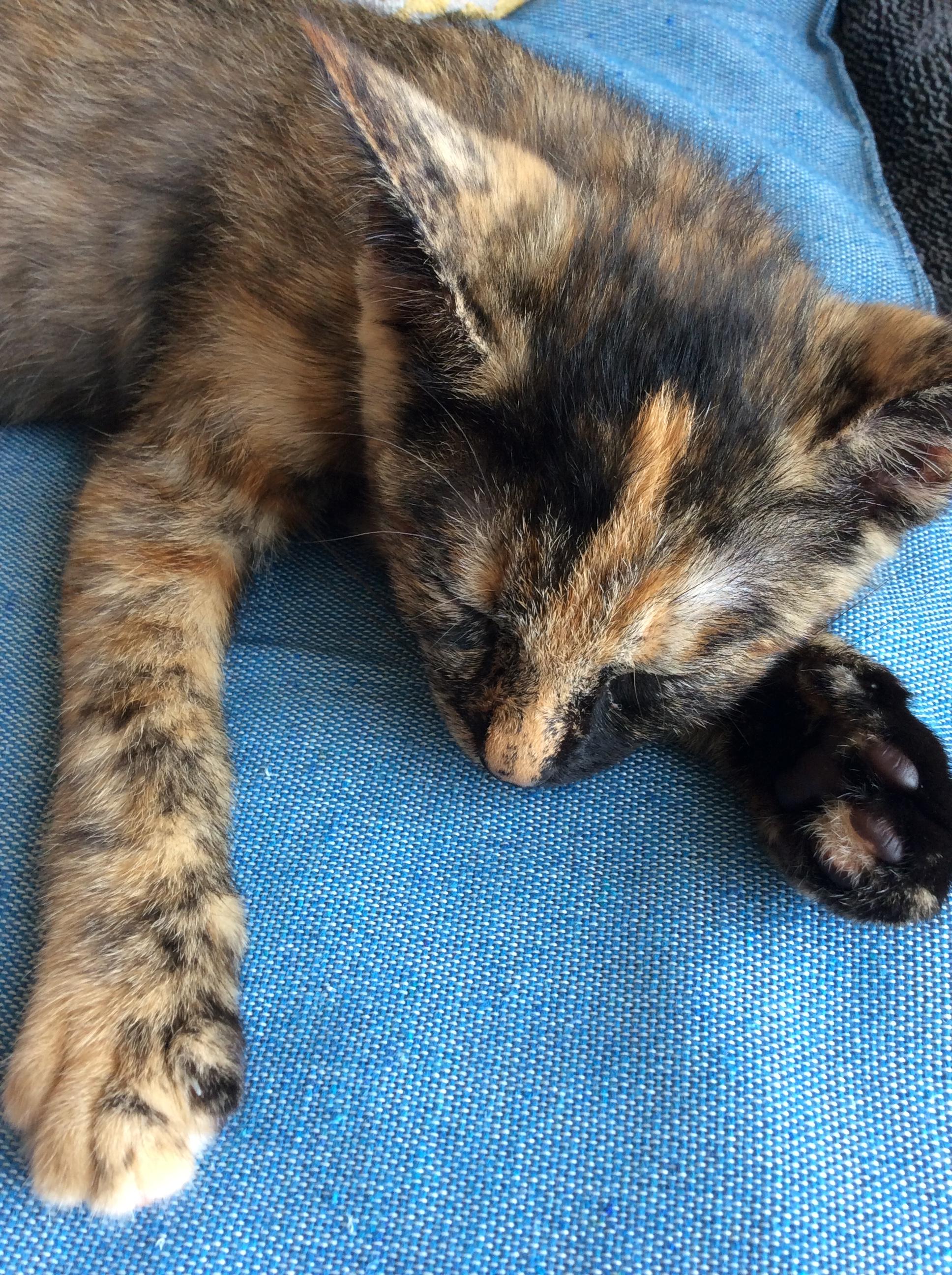 寝ている子猫