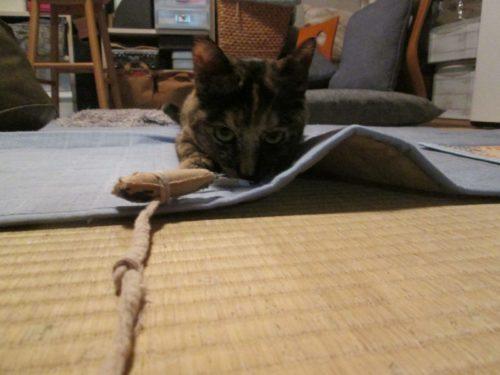 狙うサビ猫