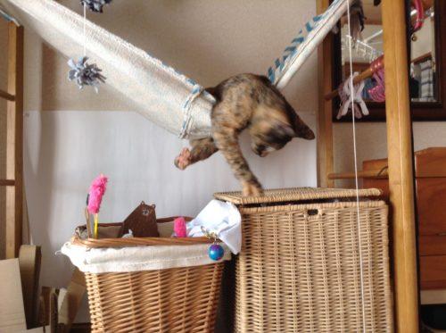 ハンモックとサビ猫