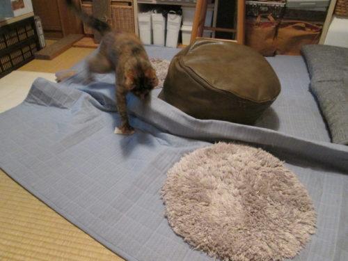 ハッスルするサビ猫