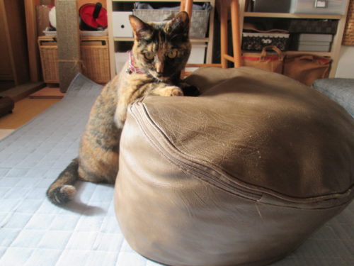 クッションとサビ猫