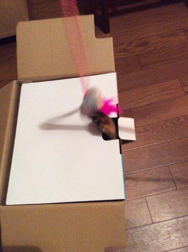 猫じゃらしと箱