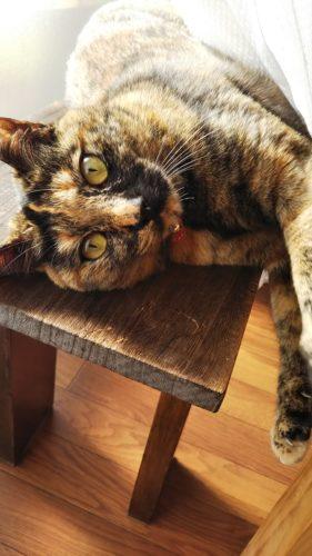 ベンチの上にサビ猫